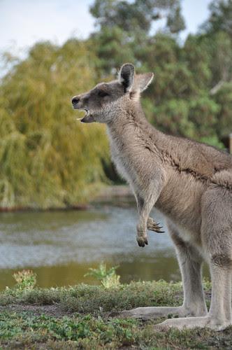 Australia (23 of 308)