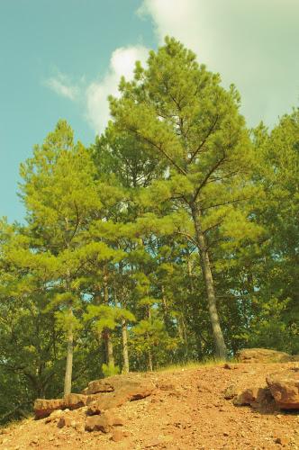 Trees -- bad white balance