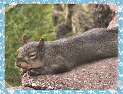 Squirrel taking a little nap