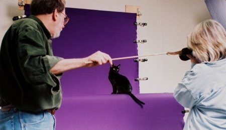 Cat photography with Ken and Helmi Flick Bombay cat being photographed