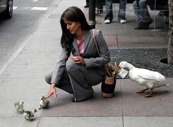 The Aflac Duck is apparently not getting paid enough by the insurance company.