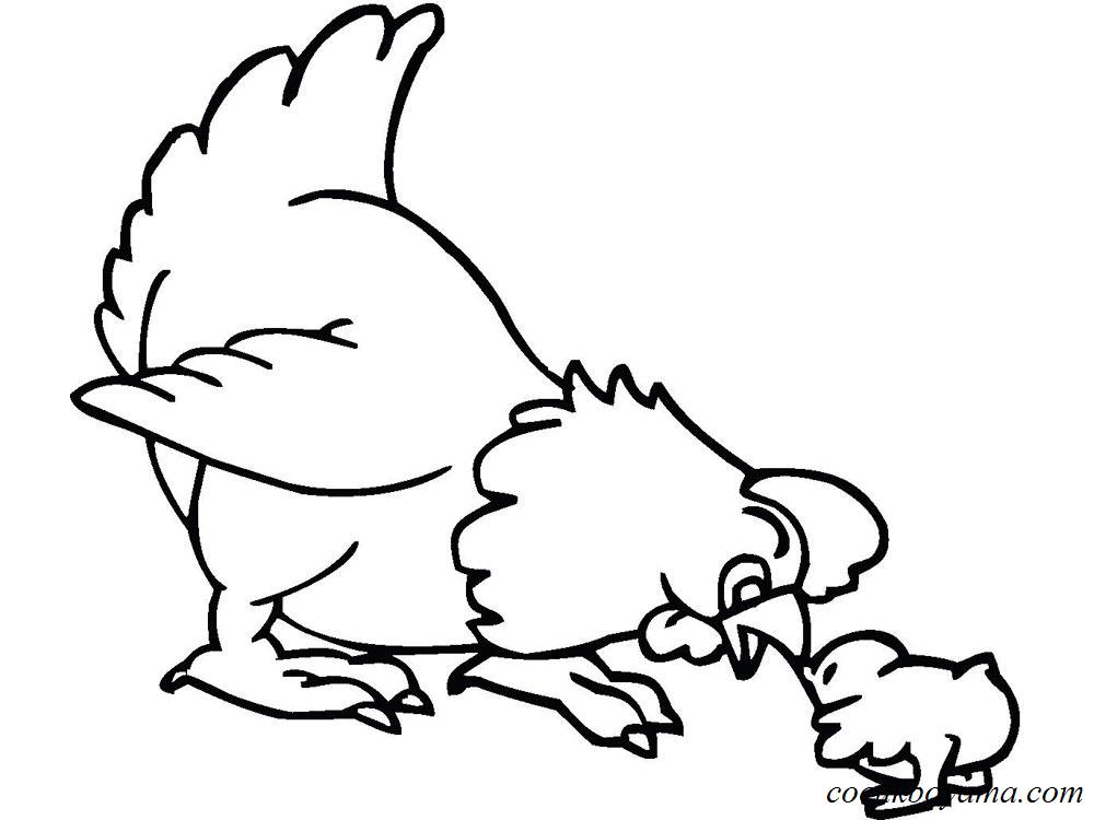 Tavuk 16 ücretsiz Boyama Resimleri