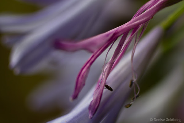 fading bloom, still beautiful