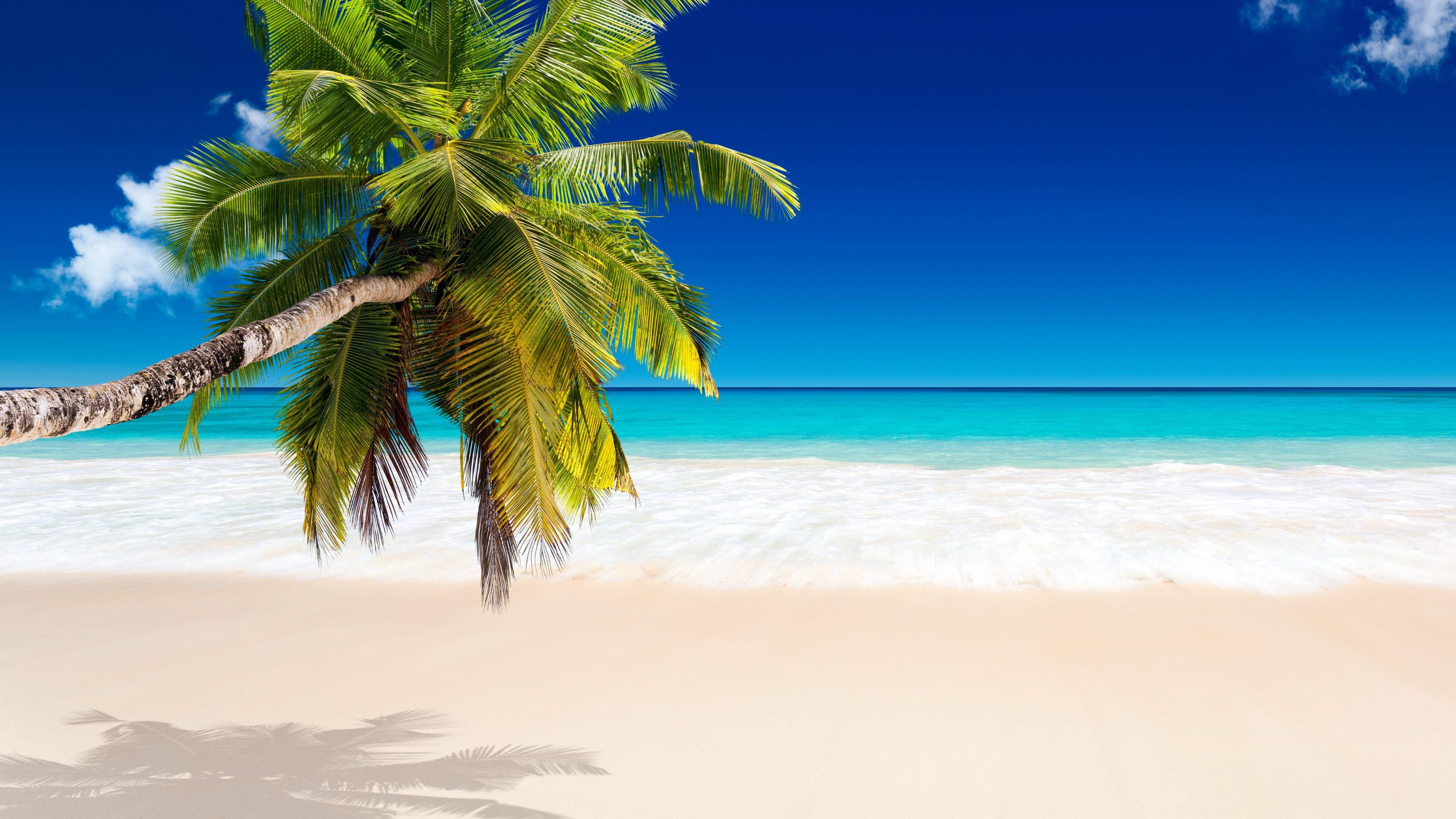 Caribbean Desktop Wallpaper 74 Images