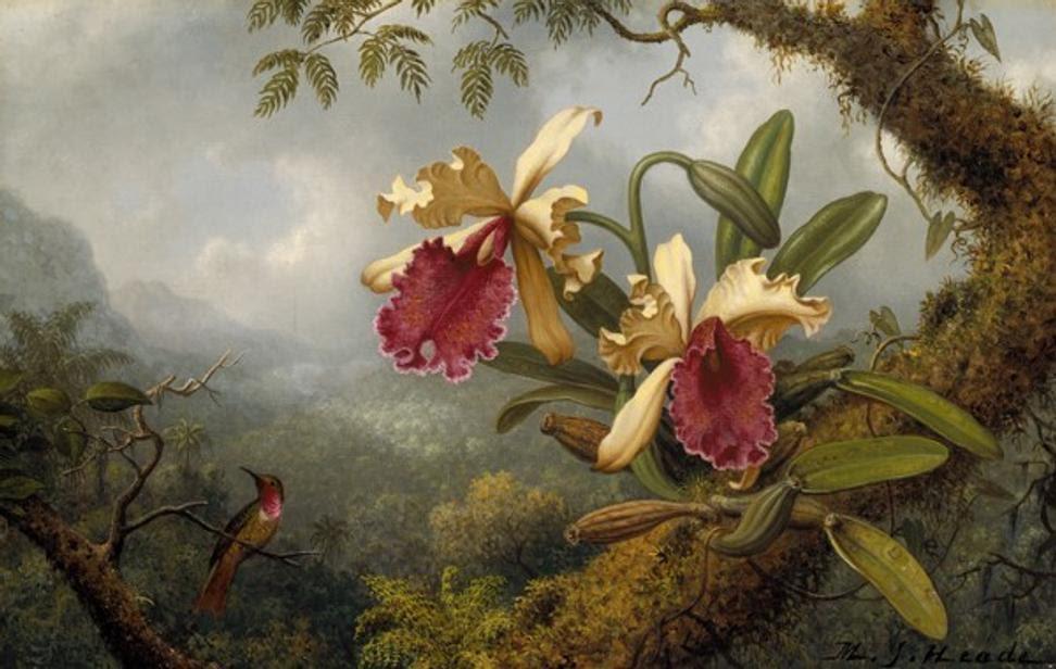 Martin Johnson Heade, Orchids and Hummingbird, 1875-83.  Museum of Fine Arts, Boston.  Gift of Maxim Karolik for the M.  and M.  Karolik Collection of American Paintings, 1815–1865.