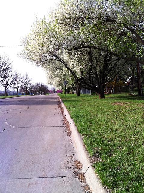 IMG_1871 Avery Lane