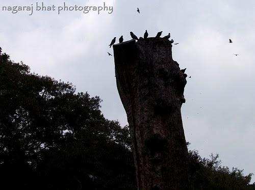ಚಿಲಿಪಿಲಿ... by Dehalli Nagaraj Bhat