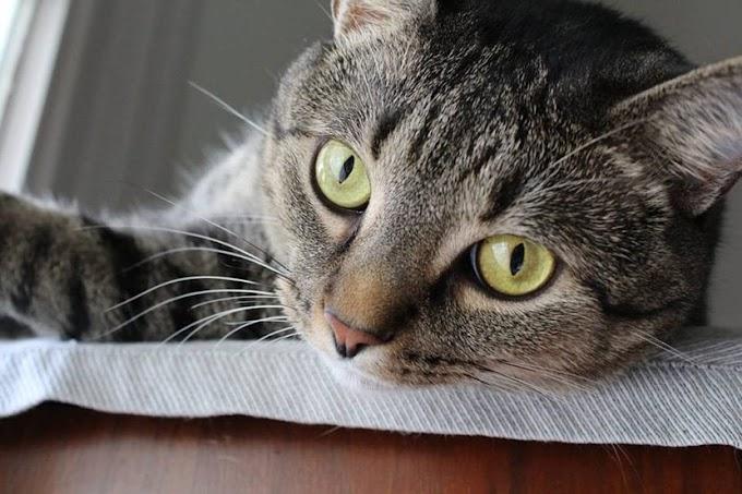 Cosas que pasan cuando un gato llega a tu vida