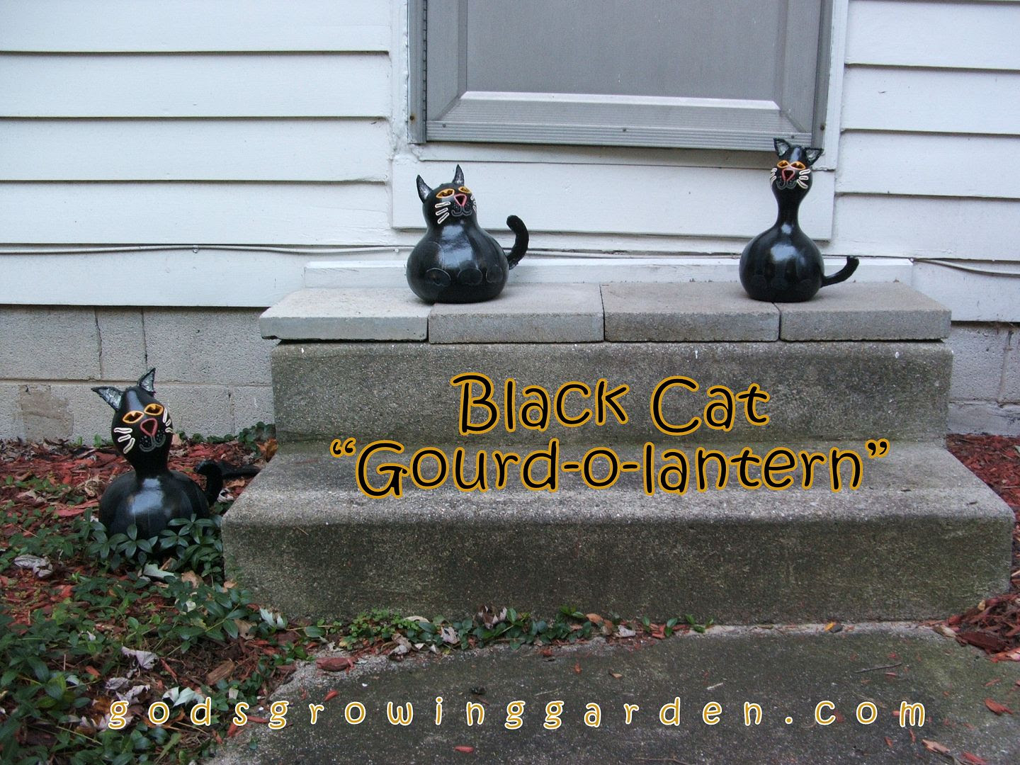 Black Cat Gourd-o-lanterns by Angie Ouellette-Tower for godsgrowinggarden.com photo DSCF1952_zpsfef94ea3.jpg