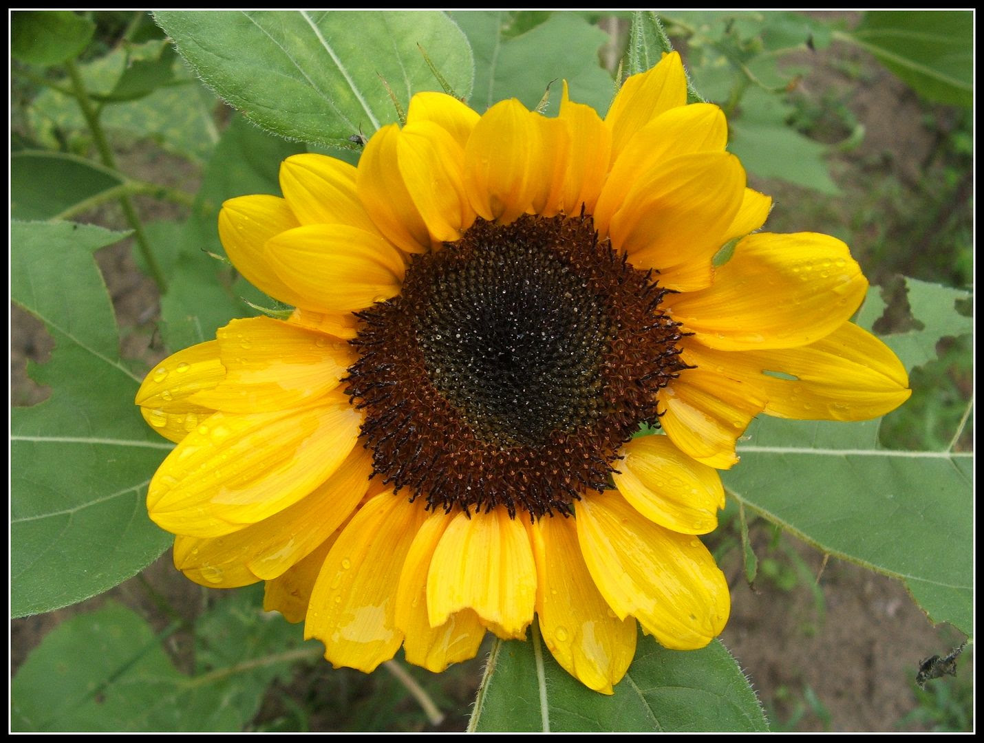 by Angie Ouellette-Tower for http://www.godsgrowinggarden.com/ photo DSCF8081_zpsmllt3kum.jpg