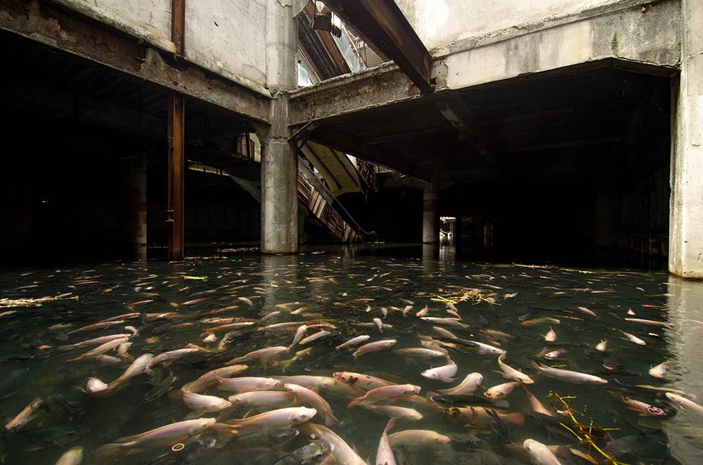 An Abandoned Bangkok Shopping Mall Hides a Fishy Secret Thailand fish Bangkok