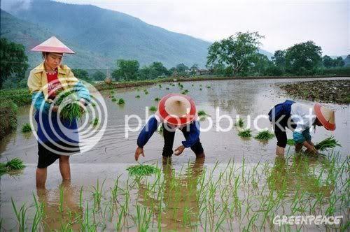 http://i895.photobucket.com/albums/ac155/agitprop/Republicans/China/Planting.jpg
