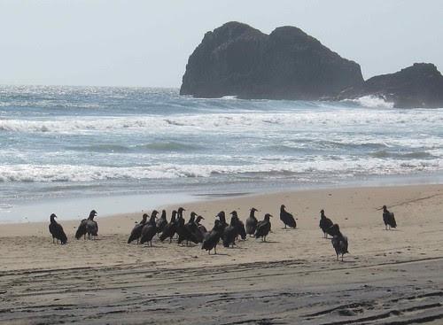 Crowd of buzzards