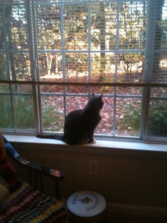 LB in Window