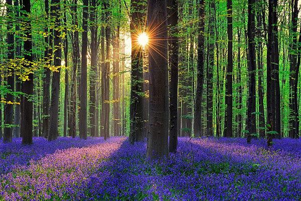 "perierga.gr - Το υπέροχο ""Μπλε Δάσος"" του Βελγίου"