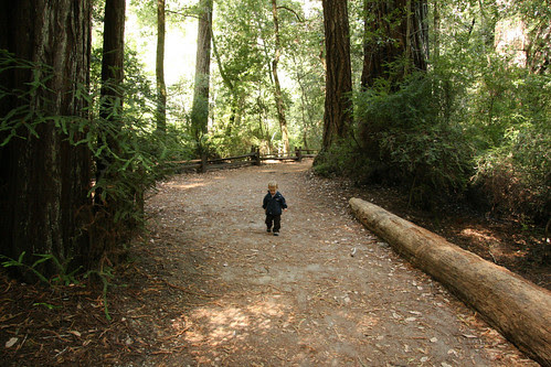 Little man in the big woods.