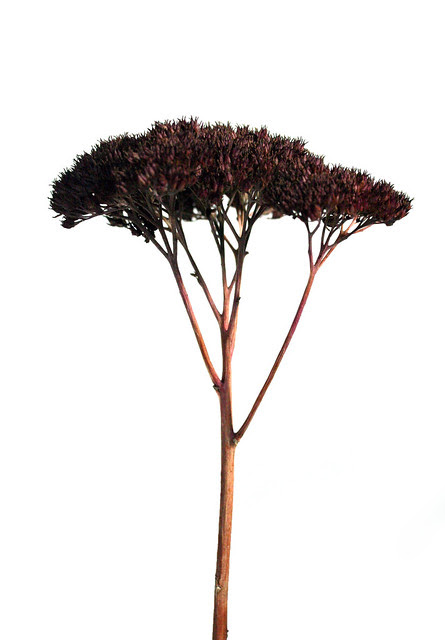 looks like a little tree