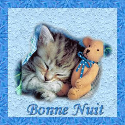 Bonne Nuit Avec Que Des Chats