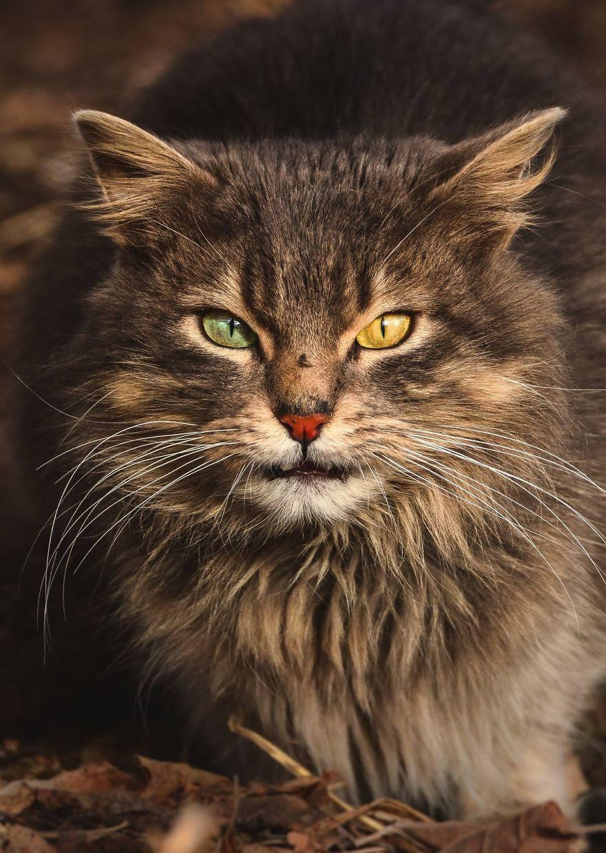 A beleza dos gatos de rua espalhados pelo mundo.