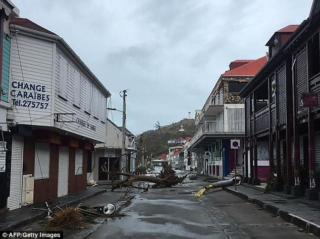 Ripped off trees in Gustavia, Saint-Barthelemy,after Irma sowed a trail of deadly devastation