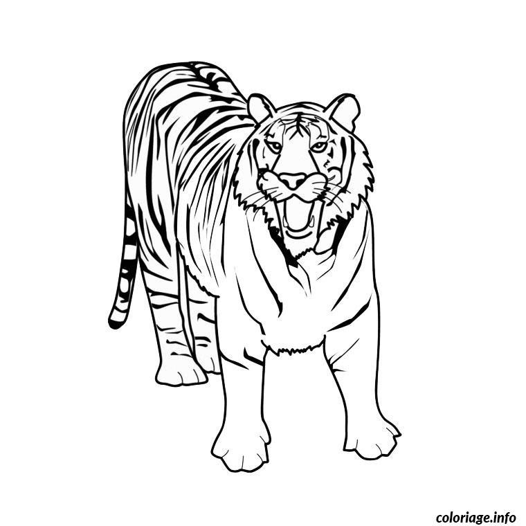 Coloriage Tigre Blanc Jecoloriecom