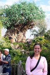 Eu e a Árvore da Vida