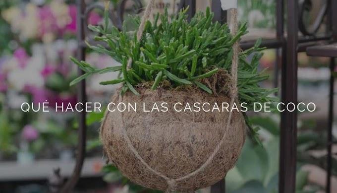QUÉ HACER CON LAS CASCARAS DE COCO