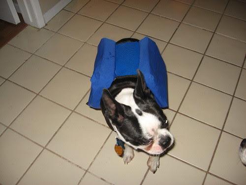 tanno pack