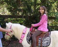 pony ride by Teckelcar