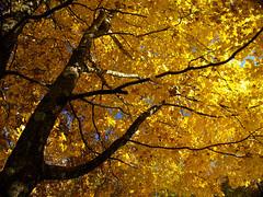 Finally...fall colors