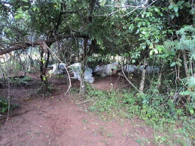 Gados morreram após descarga elétrica (Foto: Orlando Gimenes/Arquivo Pessoal)