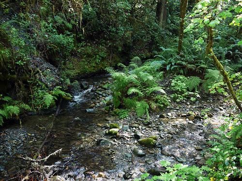 Sword Ferns, Creek