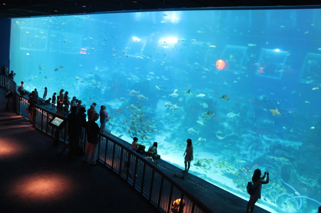 S.E.A. Aquarium Open Ocean Tank