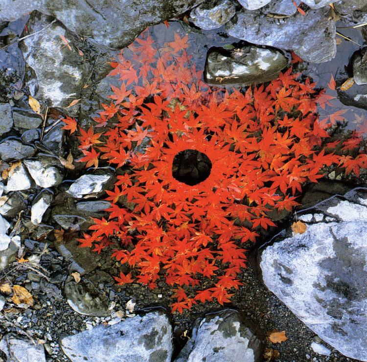 land-art-andy-goldsworthy-15