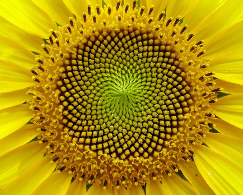 25 Fotografias de plantas para os amantes da matemática 08