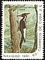 Ivory-billed Woodpecker Campephilus principalis