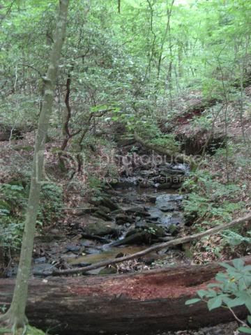 woodland stream2