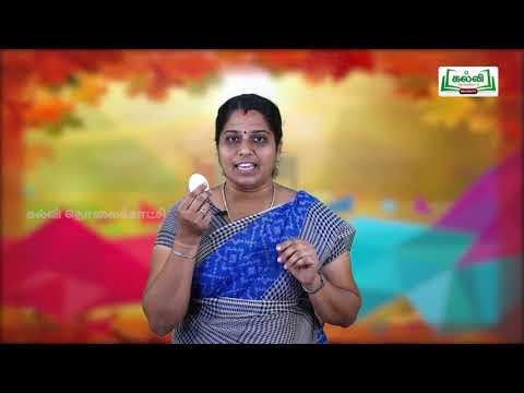 3rd English Bridge Course Articles and Usages The Simple Oral Dialogue Day 7, 8 Kalvi TV