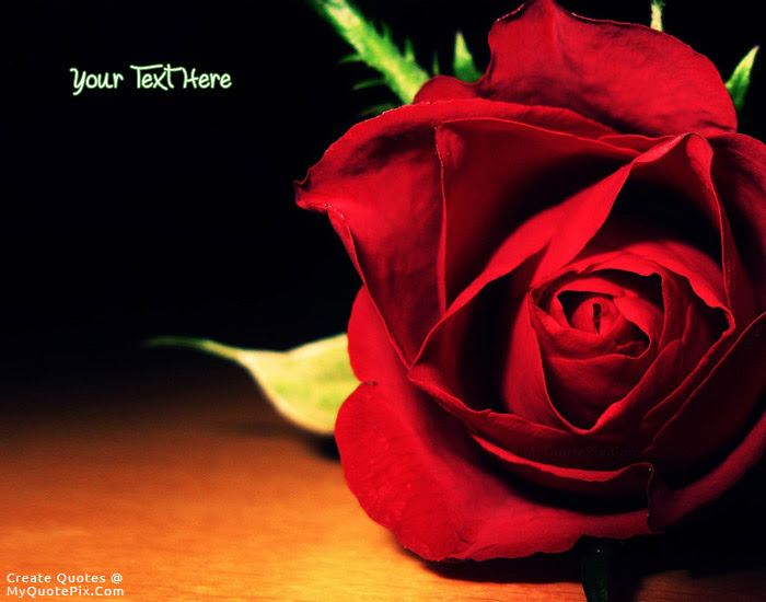 Write Quote On Red Rose Flower Picture