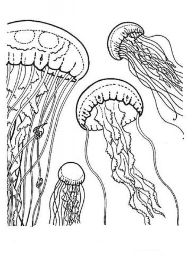 Coloring Pages Of Jellyfish  Coloring Home
