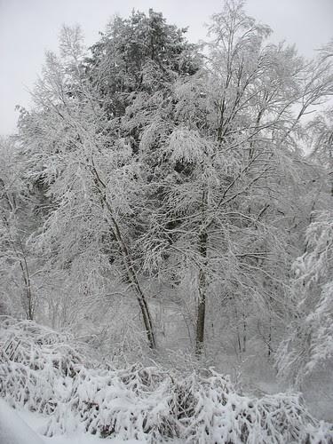 snowy14Jan08-8334