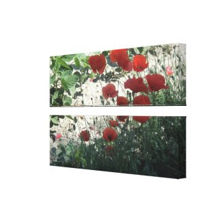 red poppies in the field stretched canvas print