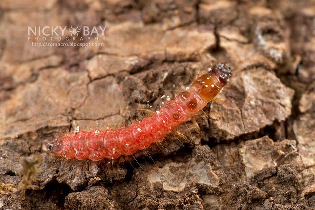 Beetle larva? - DSC_1485