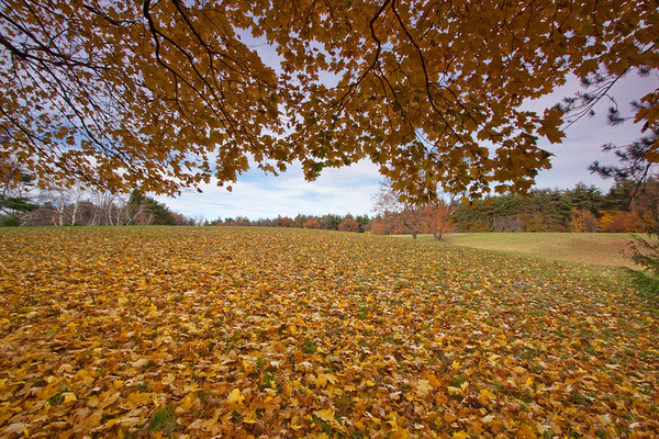 late fall, yellow leaves
