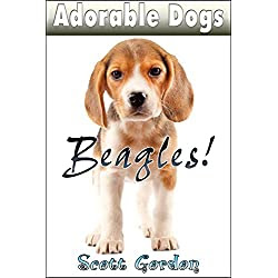 Adorable Dogs: Beagles
