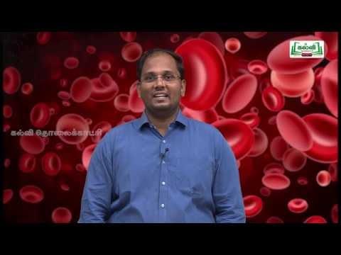NEET Zoology Blood Fluids உடல் திரவங்கள் Kalvi TV