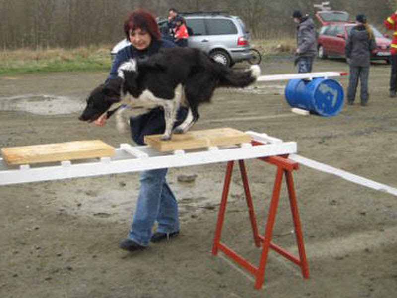 treinamento na escada para cães