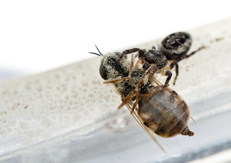 Arachnid's Breakfast by Jay Scott (jayscottphotography) on 500px.com