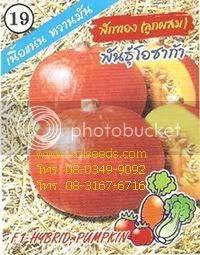 เมล็ดพันธุ์ เมล็ดพันธุ์ฟักทองญี่ปุ่น โอซาก้า ตราสามเอ