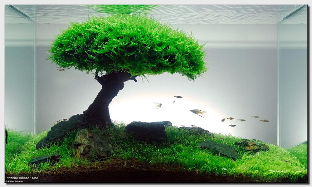 http://www.aquascapingworld.com/gallery/images/1/1_PinheiroManso_2008.jpg